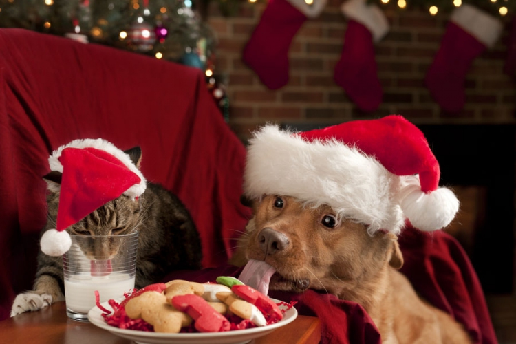 Be Vigilant! Christmas can be hazardous for your pets!