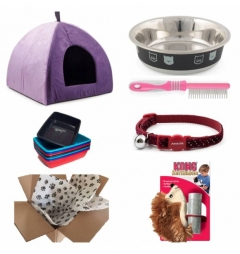 Kitten Starter Kit for Boy - Classic Purple